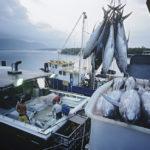 Pêche hauturière et pisciculture